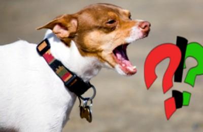 quels sont les causes des aboiements du chien ?