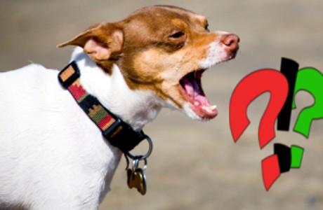 comprendre les causes de l'aboiement du chien