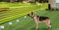 faire comprendre limite invisible au chien collier anti fugue