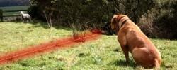 dresser le chien avec le collier anti fugue au limite du terrain