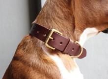 collier de chien en cuir