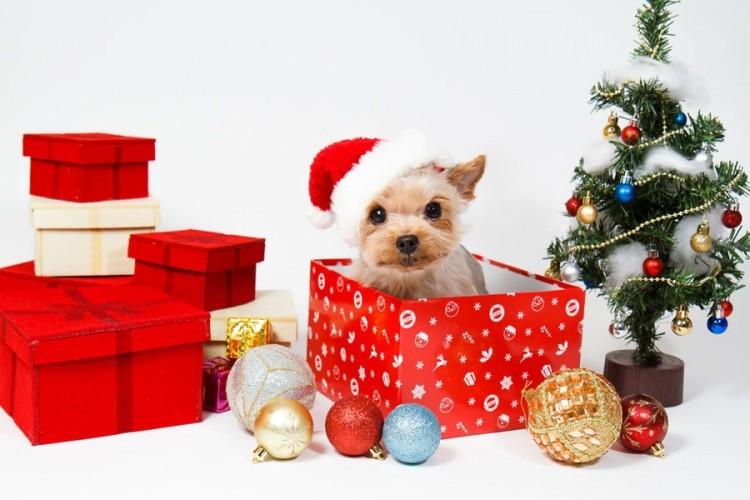 les meilleures cadeaux jouets pour chiens