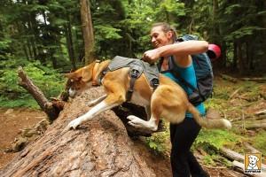 harnais avec poignee pour éviter les obstacles