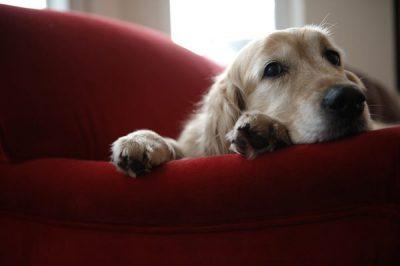budget à conscrer au chien