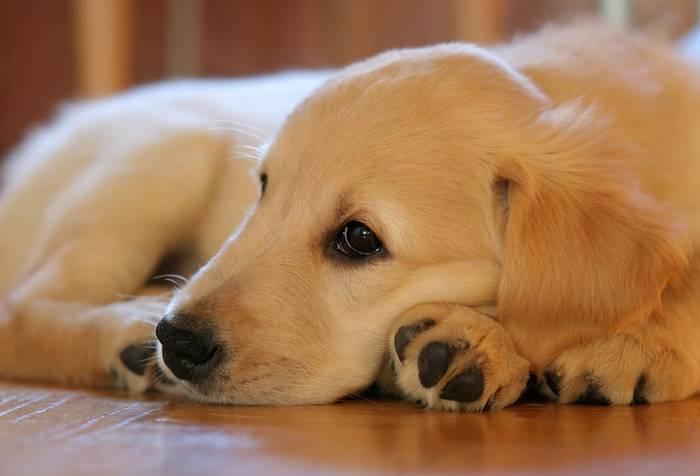 assurer son chien ou pas