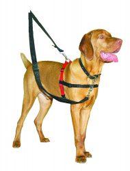 Harnais chien anti-traction Halti porté