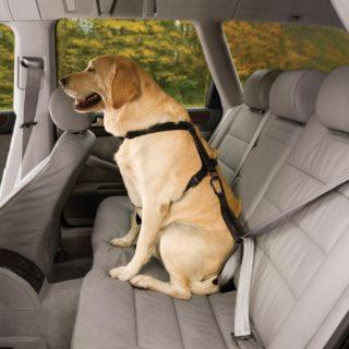securité harnais pour chien en voiture