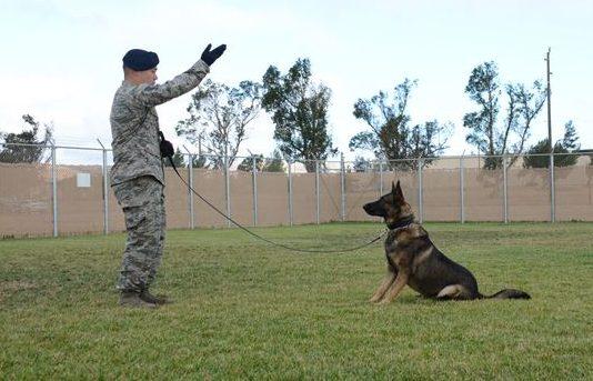 chien apprendre ordre assis