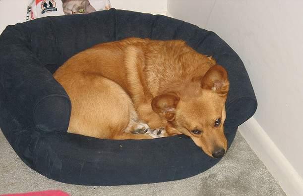chien calme au panier