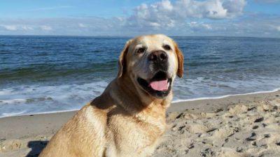 chien en vacance à la plage